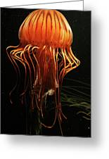 Pacific Sea Nettle Chrysaora Greeting Card