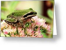 Pacific Tree Frog Greeting Card by Laurel Talabere