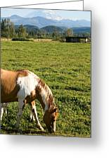 Paint Horse And Mount Rainier Greeting Card by Stacey Lynn Payne