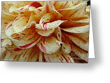 Paint Spattered Petals Greeting Card