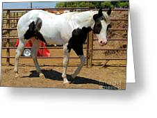 Paint Stallion - Black And White Greeting Card