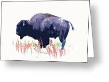Painted Buffalo Greeting Card