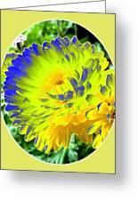 Painted Chrysanthemums Greeting Card