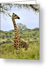 Painted Giraffe Greeting Card