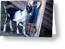 Painted Goat Greeting Card