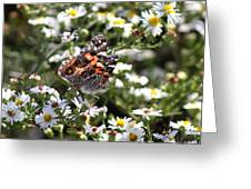 Painted Lady - Surrounded In White Greeting Card