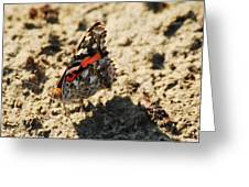 Painted Lady 8591 3341 Greeting Card