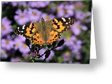 Painted Lady Among The Asters Greeting Card