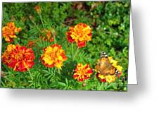 Painted Lady Butterfly In The Marigolds  Greeting Card