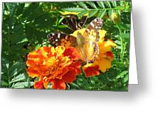 Painted Lady Butterfly Greeting Card