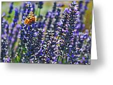 Painted Lady Butterfly On Lavender Flowers Greeting Card
