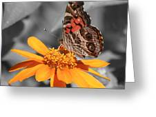 Painted Lady Butterfly On Zinnia Greeting Card