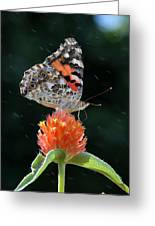 Painted Lady In A Shower Greeting Card