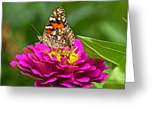 Painted Lady With Zinnia Greeting Card