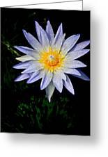 Painted Lily Greeting Card