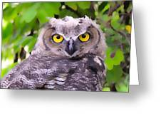 Painted Owl Greeting Card