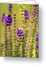 Painted Purple Sage Salvia Greeting Card