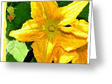 Painted Squash Blossoms Greeting Card