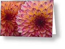 Painted Stacked Dahlias Greeting Card