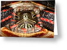 Painted Turtle Head Greeting Card