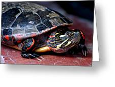 Painted Turtle Michigan Greeting Card