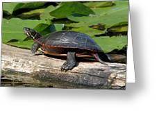 Painted Turtle On Log Greeting Card