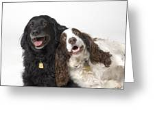 Pair Of Canine Friends Greeting Card