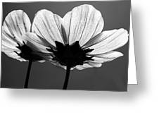 Pair Of Cosmia Flower Greeting Card