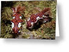 Pair Of Miamira Magnifica Nudibranch Greeting Card