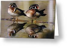 Pair Of Wild Birds Greeting Card