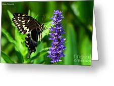 Palamedes Swallowtail Butterfly Greeting Card