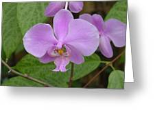Pale Pink Orchid Greeting Card