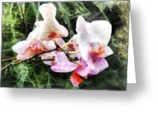 Pale Pink Phalaenopsis Orchids Greeting Card