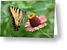 Pale Swallowtail And A Halo Greeting Card