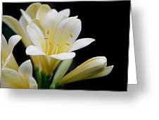Pale Yellow Clivia Miniata Flowers Greeting Card
