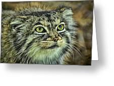 Pallas Cat Greeting Card