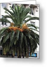 Palm At Vine Greeting Card