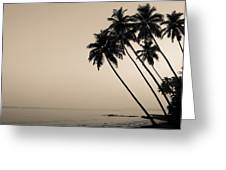 Palm Dreams Greeting Card