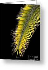 Palm Frond Against Black Greeting Card