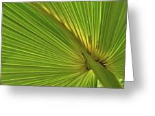 Palm Leaf II Greeting Card