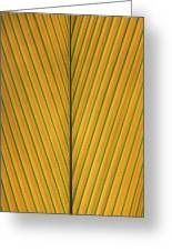 Palm Leaf Showing Midrib And Veination Greeting Card