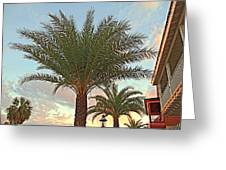 Palm On The Avenida Greeting Card