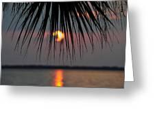 Palm Set Greeting Card
