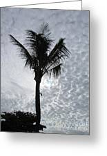 Palm Shadow Greeting Card