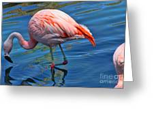Palm Springs Flamingo Greeting Card