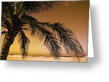 Palm Tree And Sunset In Mexico Greeting Card