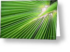 Palm Tree Frond Greeting Card