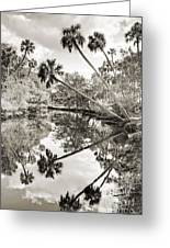 Palm Tree Reflections Greeting Card