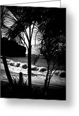 Palm Tree Silouette Greeting Card