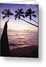 Palm Trees At Dusk Greeting Card